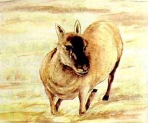 藏羚羊的跪拜 阅读答案老猎人是怎样一个人