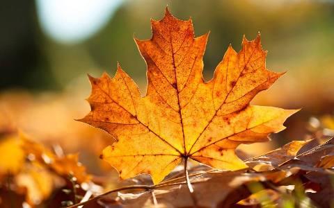 人间最美是清秋